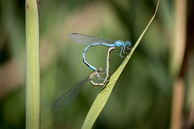 Love - what would be the result of blue and green :-)
