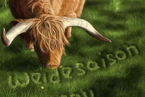 Cover Illustration Highland Cattle