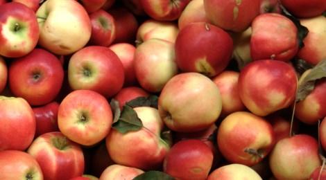 Pressemitteilung: Schulessen verbessern und künftig Äpfel aus der Region