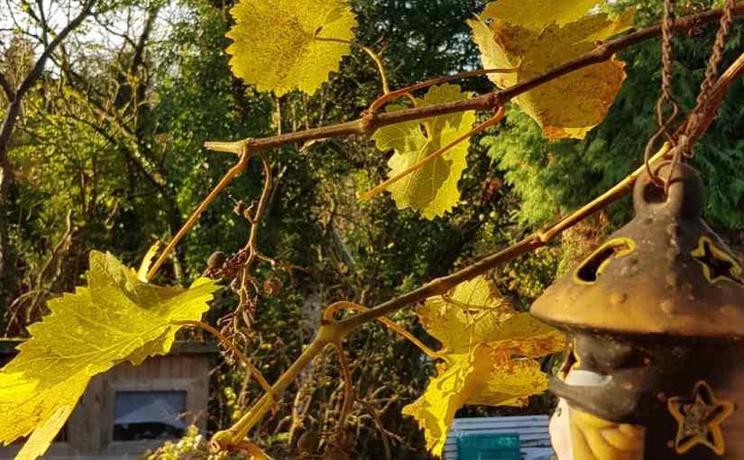 Tag…, Coronakrise,  Garten und wärmende Sonnenstrahlen
