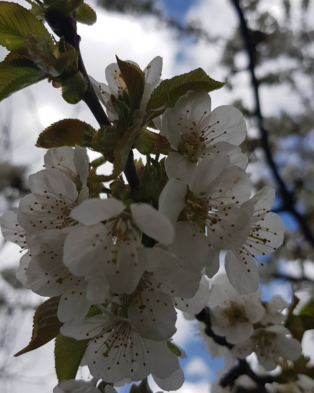 Sonntag,  25.04.21, Tag des Baumes