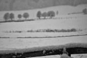 Nevicata