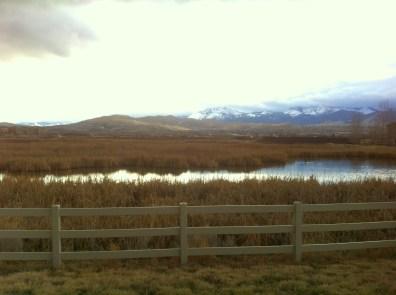 the wetlands Damonte ranch feb 2014 6