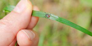 PEMF for Lymes disease