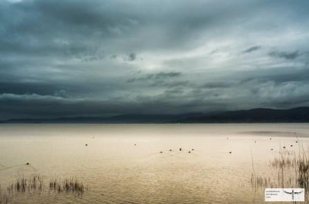 Lago Trasimeno-2