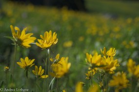 LensBabyAlbionWildflowers-3
