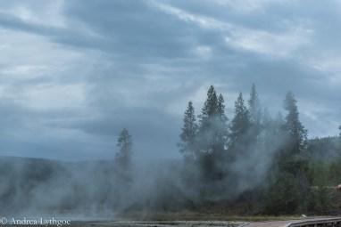 Yellowstone2015-8
