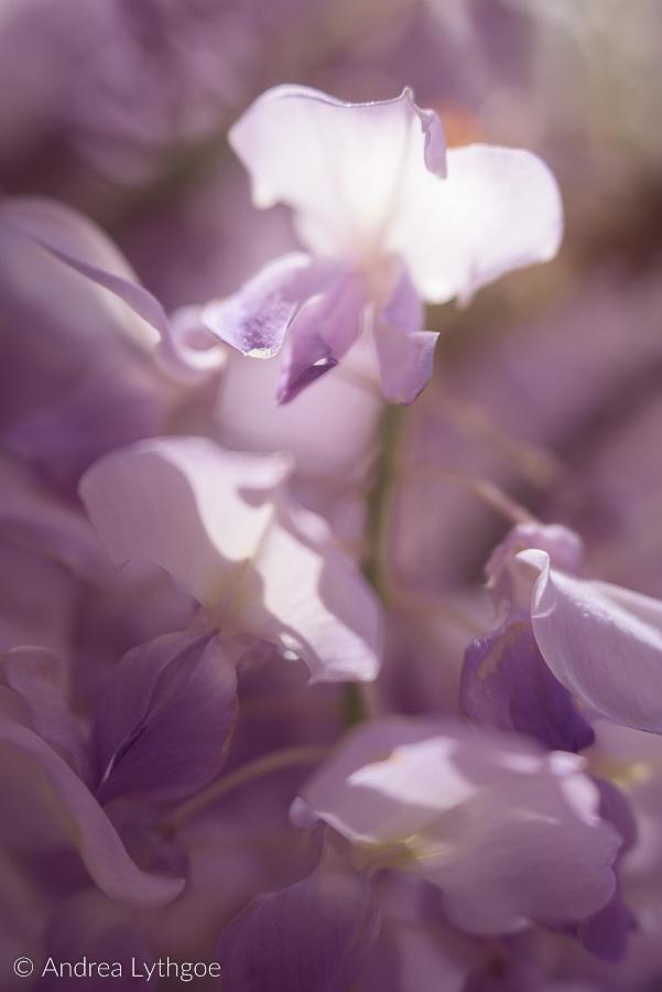 Lensbaby Garden-4