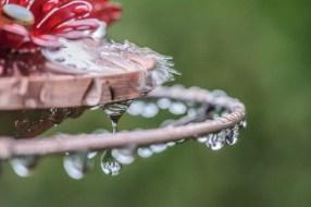 Wet Feeder-14
