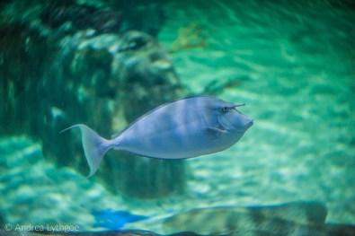 LBT-Aquarium-3