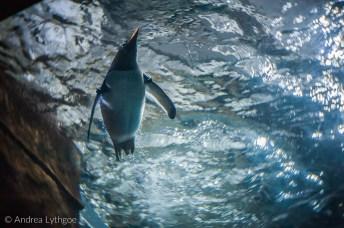 LBT-Aquarium-5