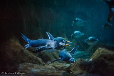 LBT-Aquarium-6