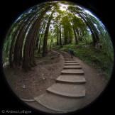 Muir Woods-1