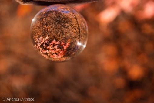 Crystal Ball Shots-2