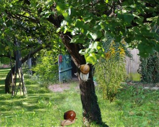 Garten Baum Ende