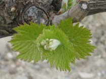 primavera-a-vertine-16