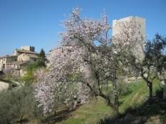 primavera-a-vertine-39