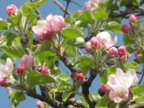 primavera-a-vertine-57