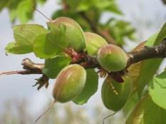 primavera-a-vertine-9