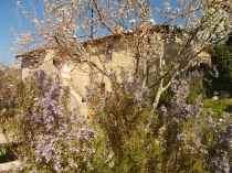 fiore di ramerino e susina (2)
