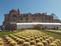 cactus giromagi castiglion del lago (11)