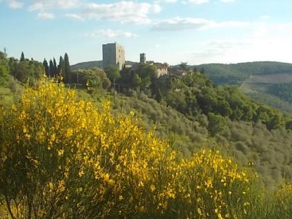 potatura oliveta di vertine (9)