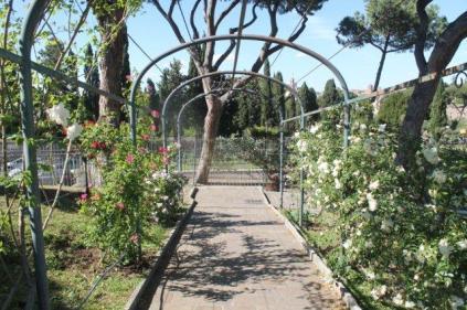 roseto di roma (11)