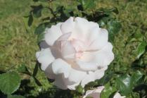 roseto di roma (26)