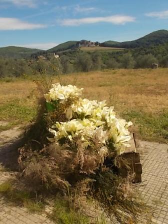slow flowers podernovi chianti castello di brolio (26)