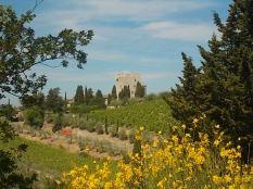 vertine ginestre oliveta cappella (10)