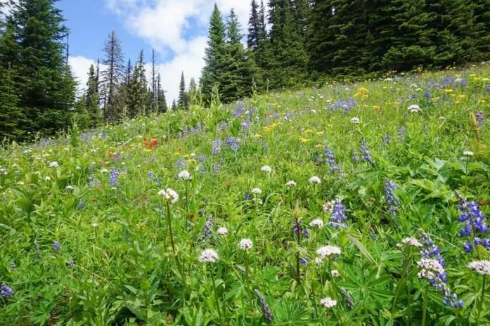 Sun Peaks, Kamloops wildflower hike