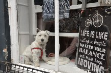 There were Westies everywhere!!! This one was the cutest puppy!