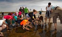 Wattwanderung Westerhever Wattenmeer Kinder Menschen