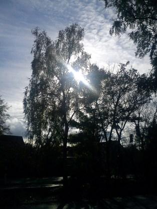 EinSCHÖNer-HERBST-(tag)aufdem WEG in die NEUe WOHNUNG geht zu ENDE4