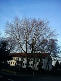 WEISHEIT(s)BÄUME--NEUjahr(s)GRÜßE13
