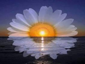In dieser SONNE(n)BLUME....SPIEGEL(t)sich das MEER der......erWACH(t)en MEER((es))RAUSCHEN--KLÄNGE in dir wieder...und kehrt in RESONANZ in dir zurück