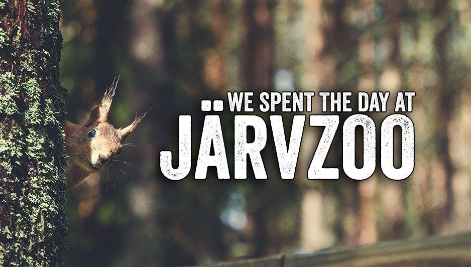 A squirrel at Järvzoo