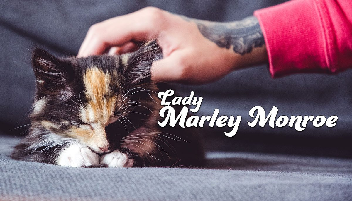 Introducing Lady Marley Monroe - kitten cuteness overload!