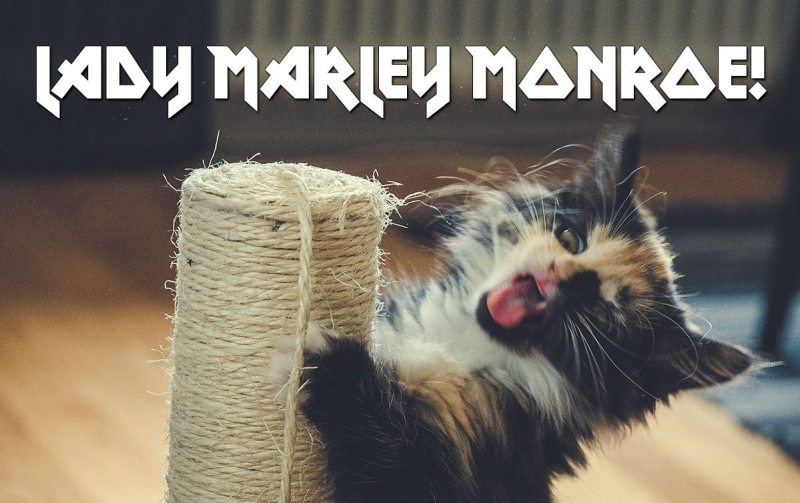 Lady Marley Monroe