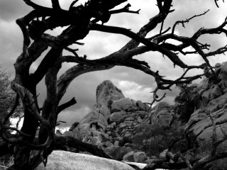 California B&W – Joshua Tree National Park