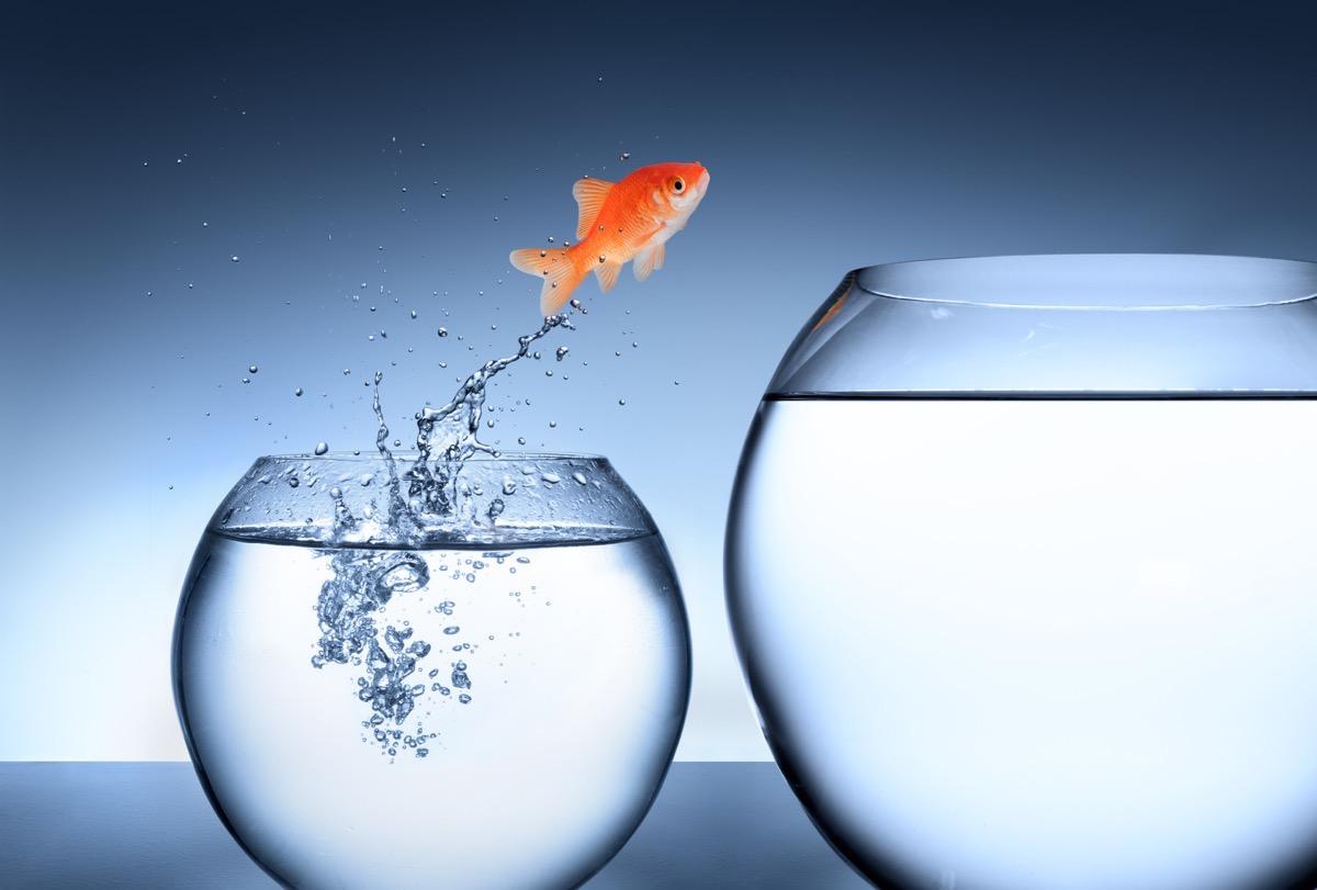 Vorwärts kommen als Unternehmer, ein Fisch springt ins nächste Becken