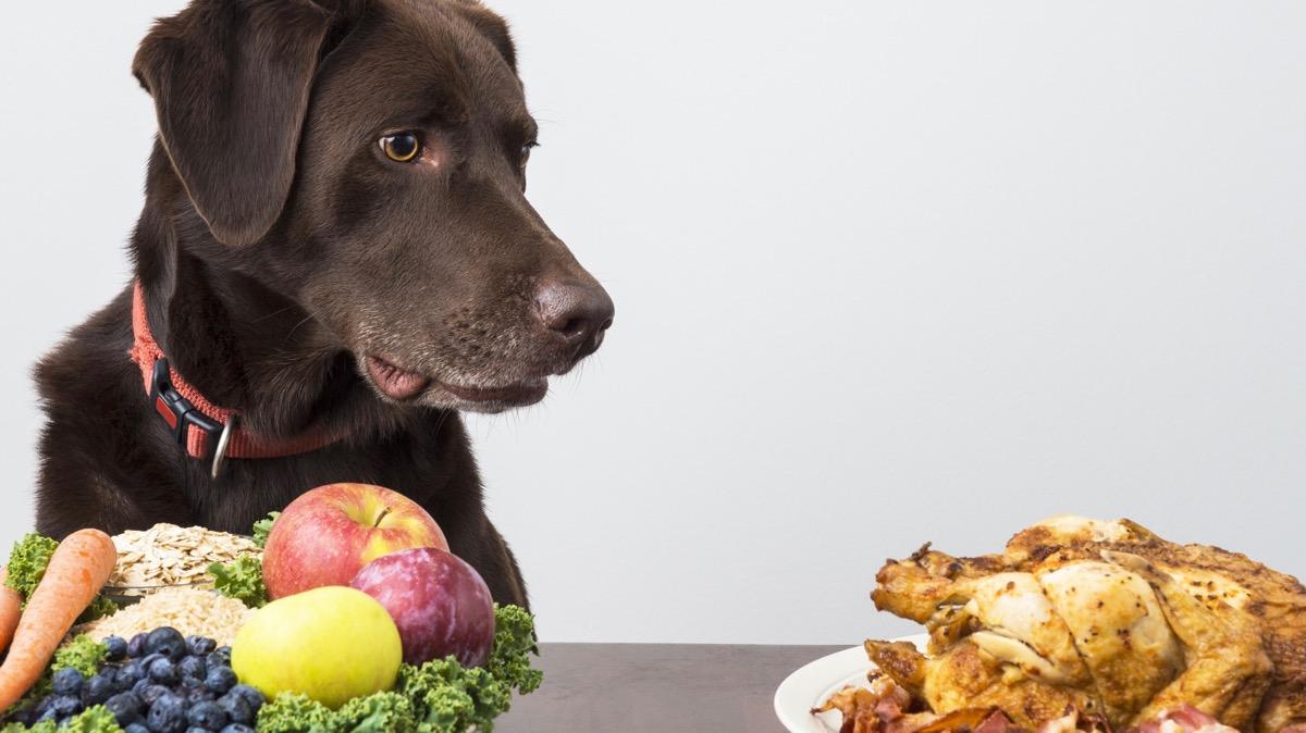 Hund Diät scheitern