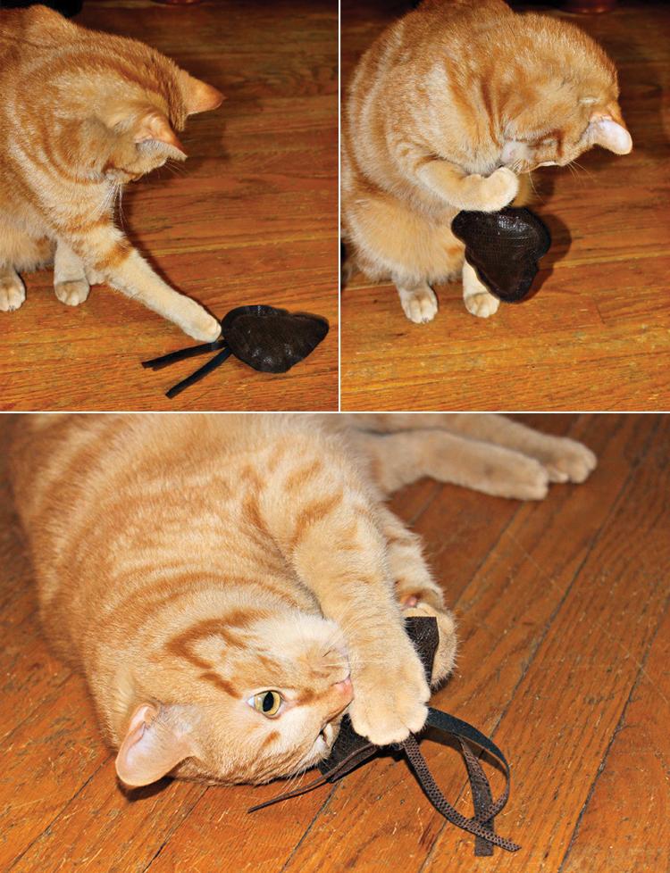 DIY catnip cat toy
