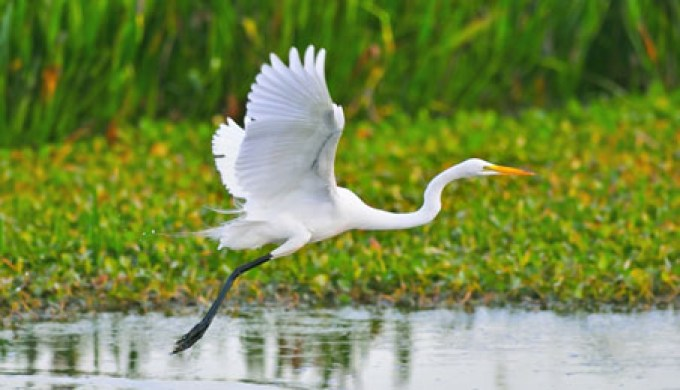 25 Family Vacations for Active Kids (Everglades, FL)