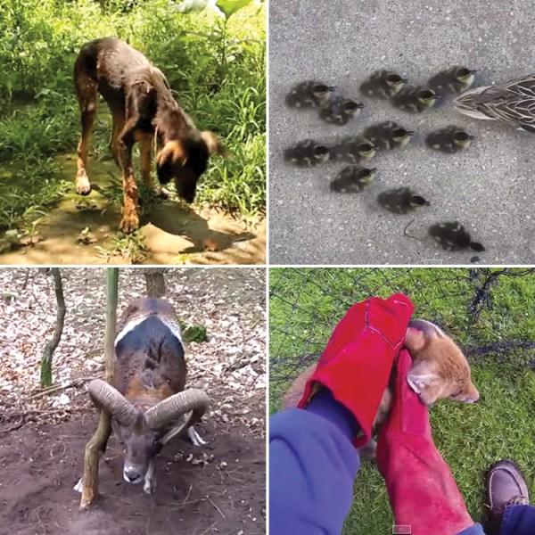 Amazing animal rescue videos!