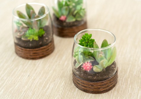 wood base DIY succulent terrariums