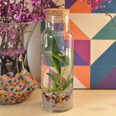 Water terrarium