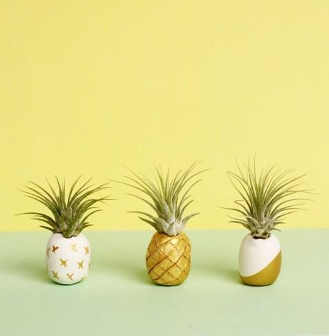 DIY pineapple air plant