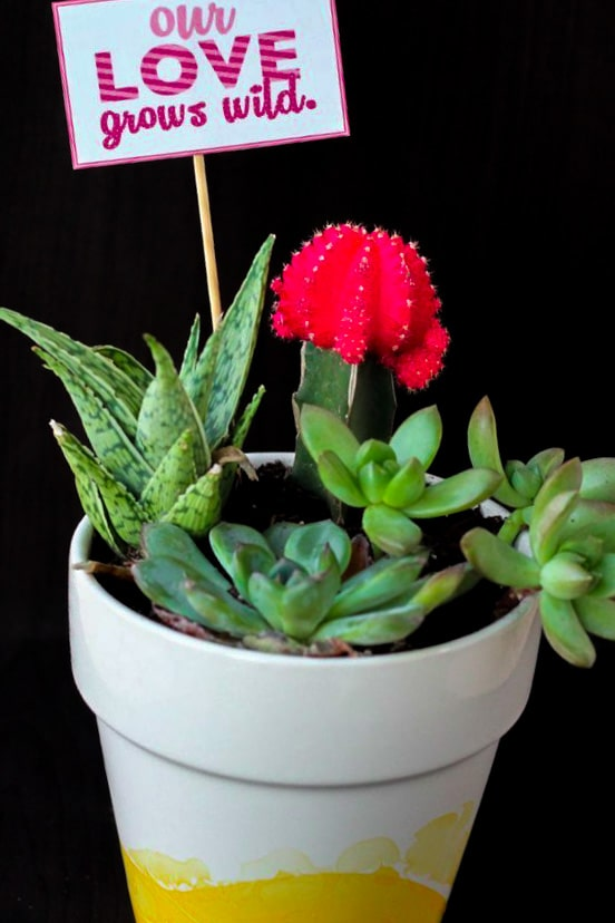 """planted succulent plants with valentine tag inside that says """"our love grows wild"""""""