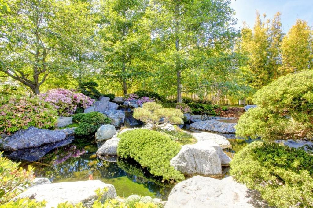 Beautiful Japanese Friendship Garden in Balboa Park, San Diego. Green plants and plants with flouring pink flours surrounding a koi pond. Tall green trees in background.